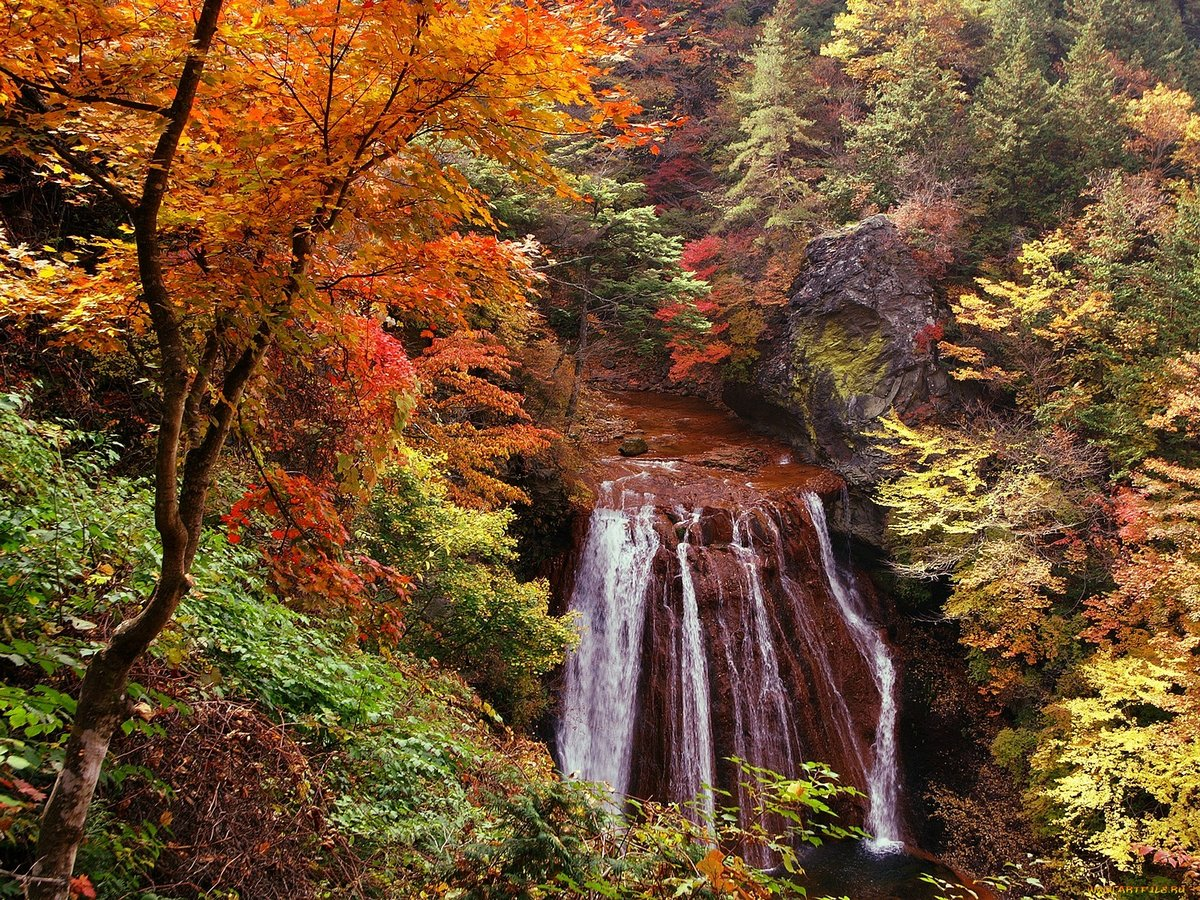 Картинки анимация природа осенью