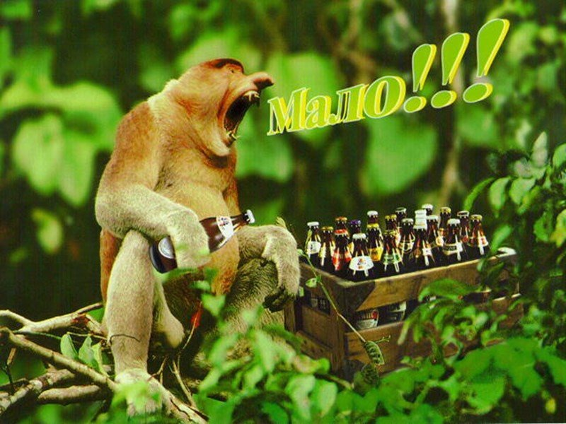 Хочу пива смешные картинки, картинках спокойной ночи
