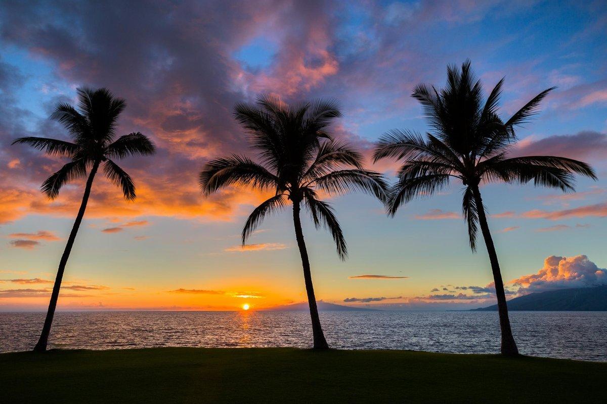 Красивые картинки пальмы