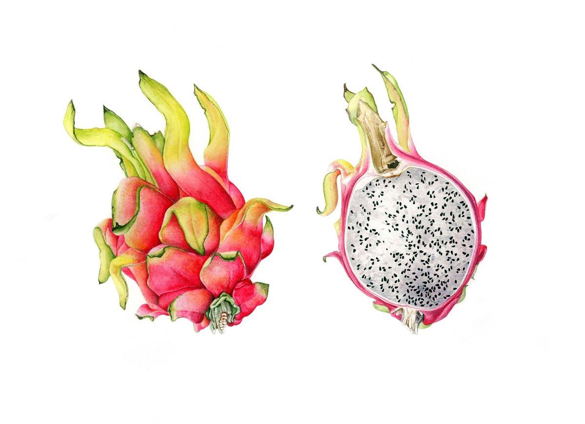 середине драконий фрукт картинки нарисовать вариант лучше