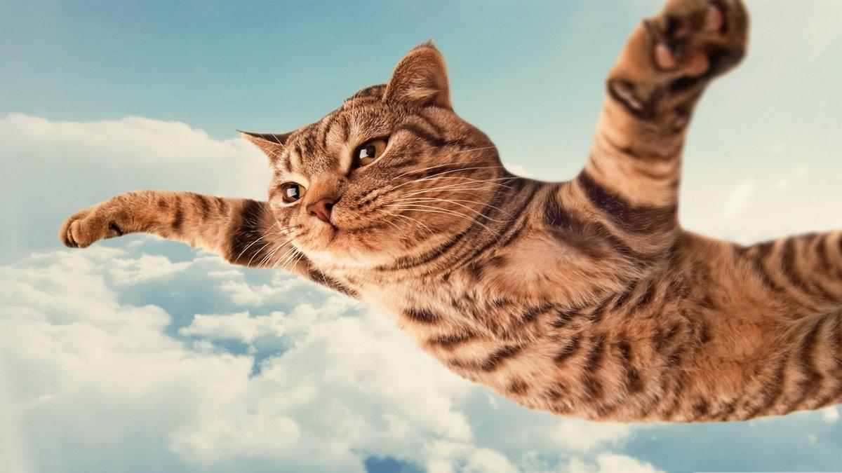 Декабре, котик веселые картинки