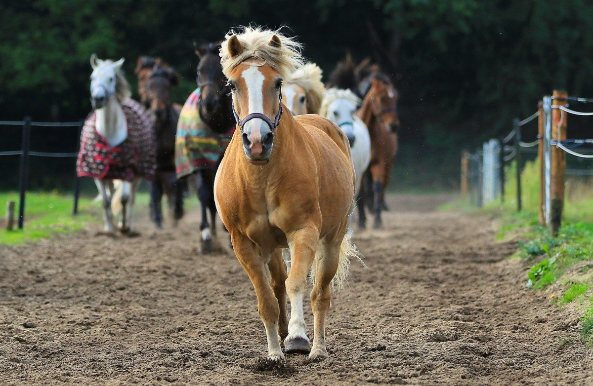 приют а кони все бегут картинки такое