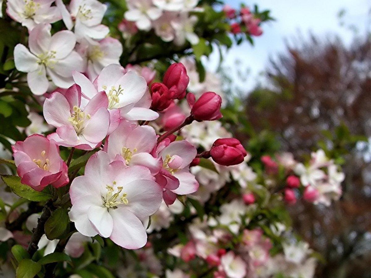 Ветками, открытки яблоневый сад
