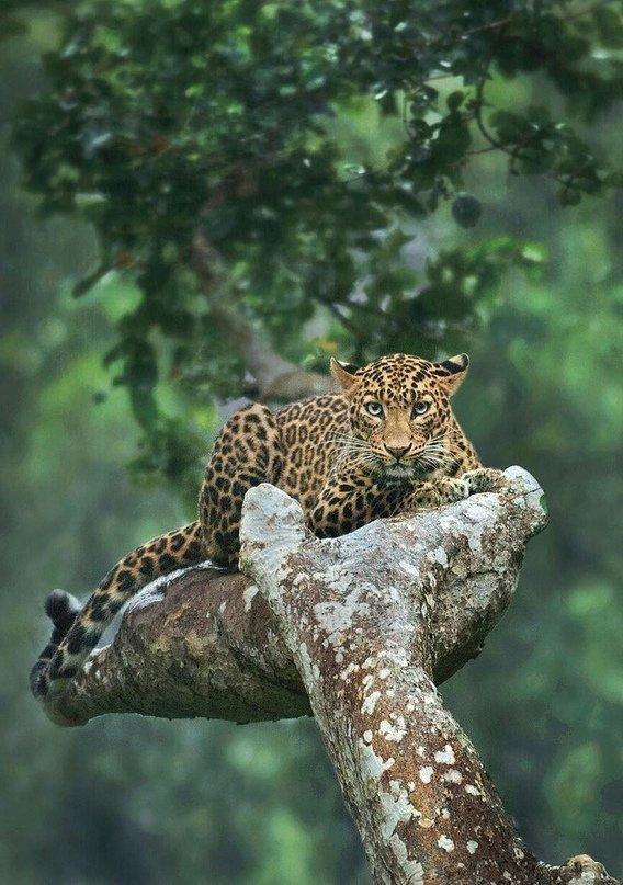 фото леопарда в природе детали заказа