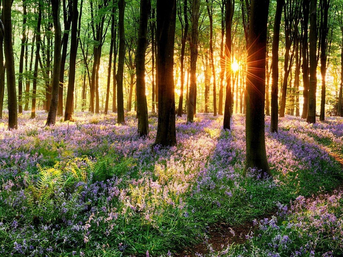 Картинки весна в лесу