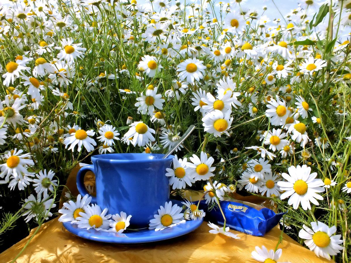 Открытка с полевыми цветами с добрым утром