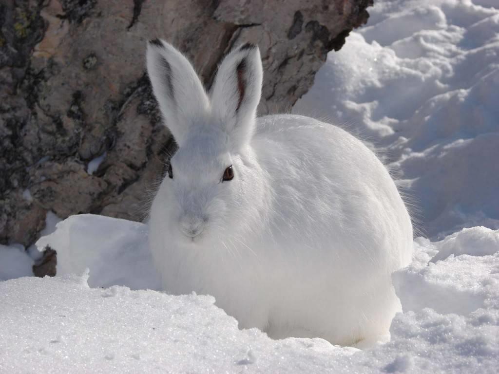 Картинки зайца