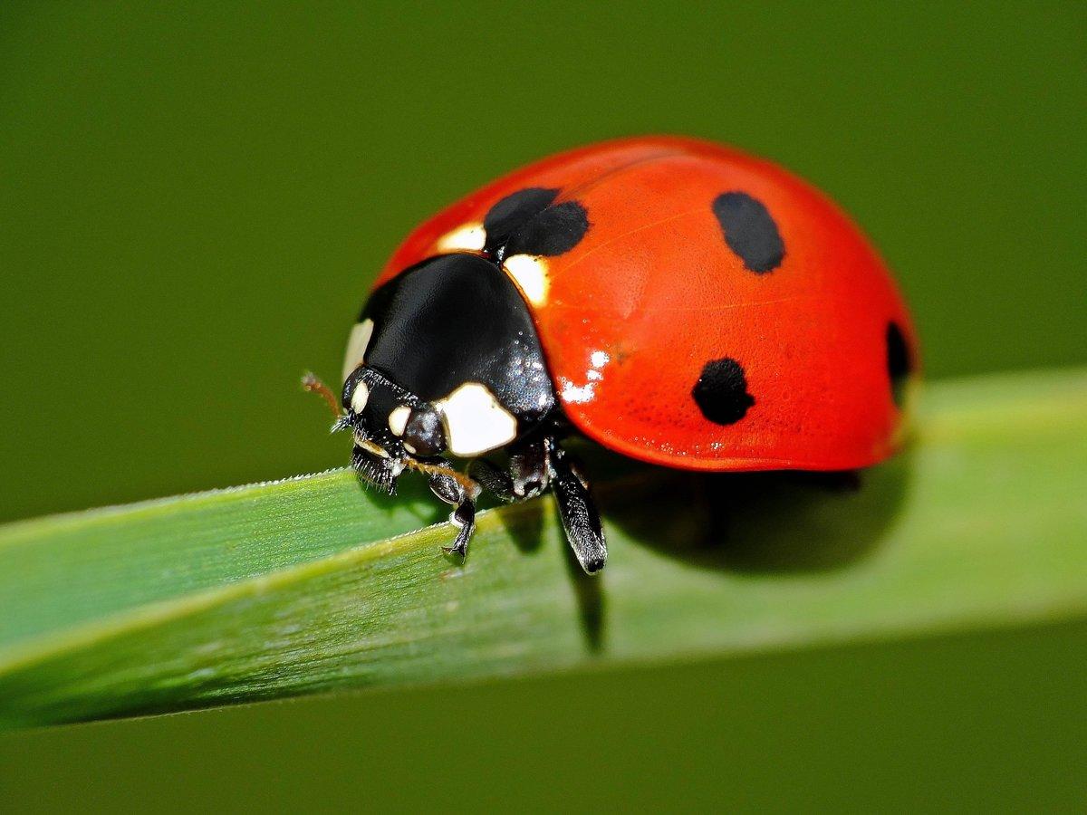 Про коллег, картинка с насекомыми