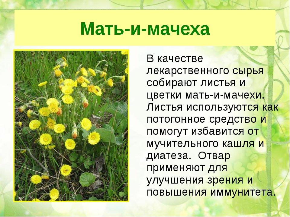 какой картинки презентации лекарственные растения ассортимент тестомесов тестомесильных