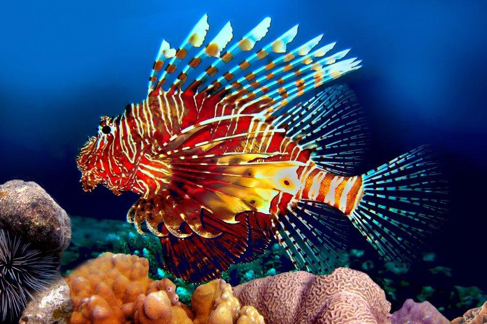 День, рыбы фото красивые