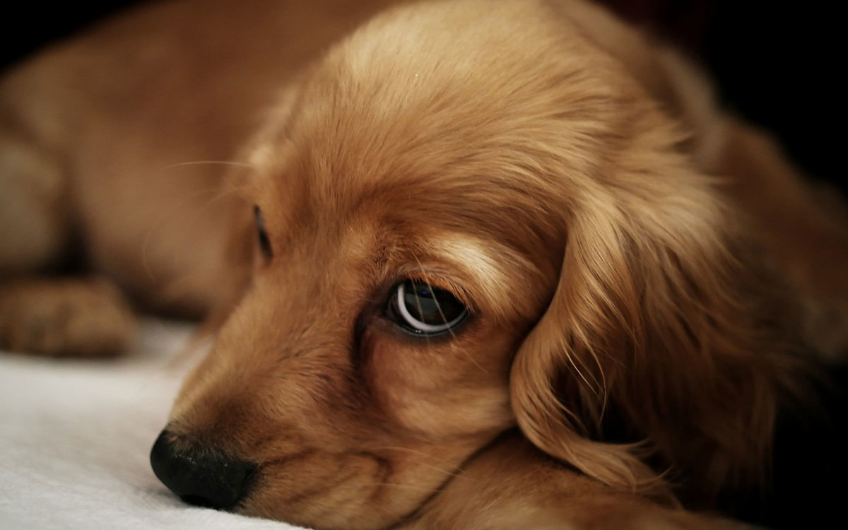 грустная картинка щенка выбираем