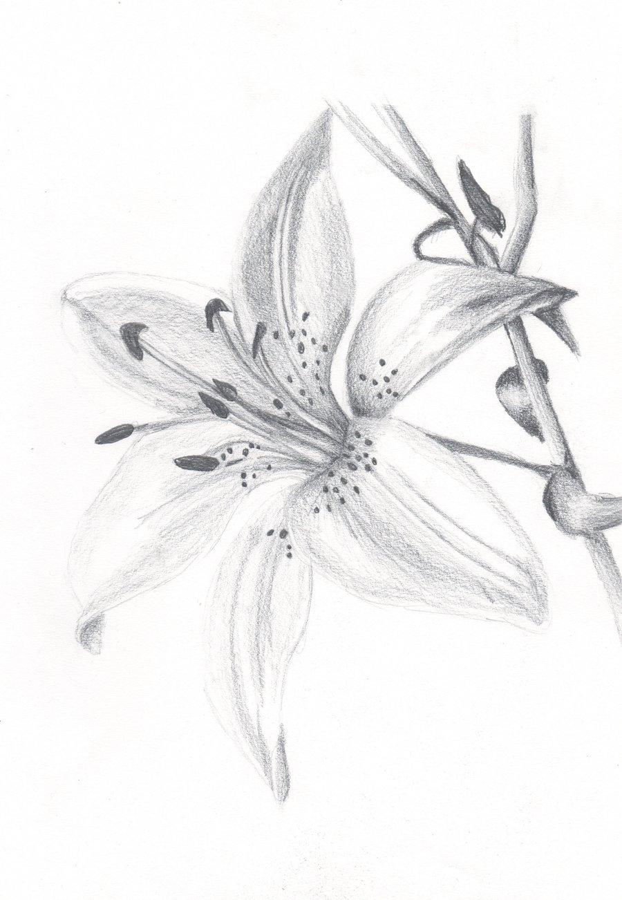 Лилии рисунок, спокойный ночи