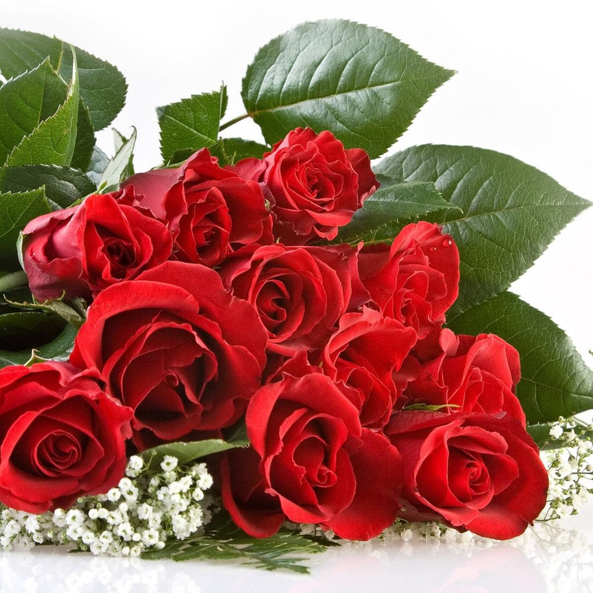 Скачать картинку на телефон бесплатно: цветы, растения, розы.