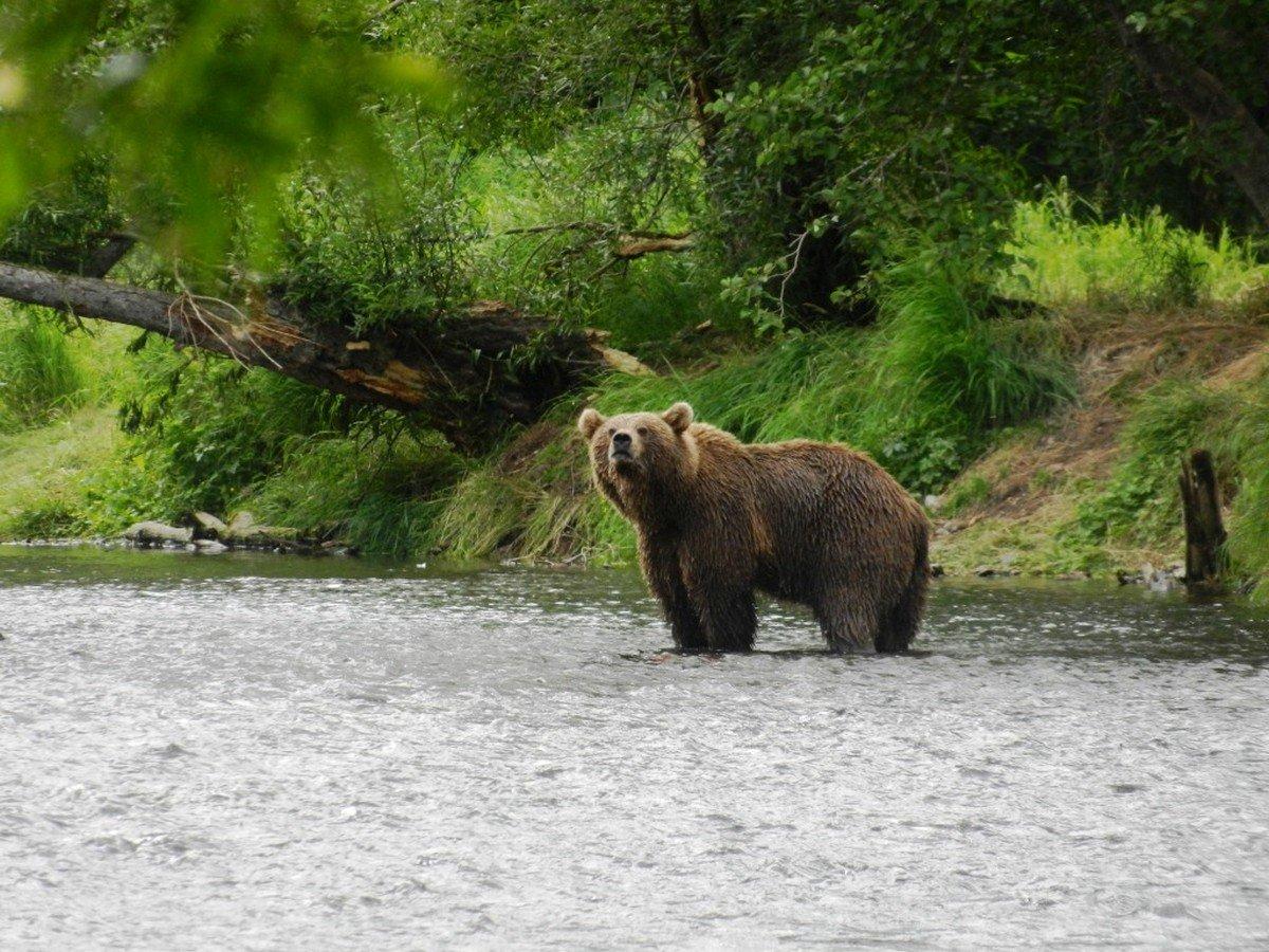 фото полого акта медведей