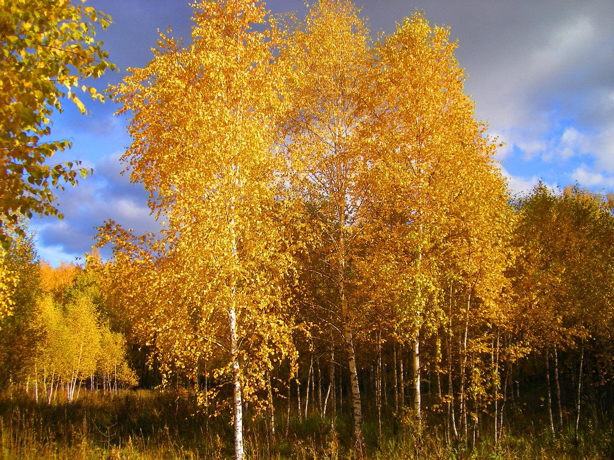 Осенняя роща картинки