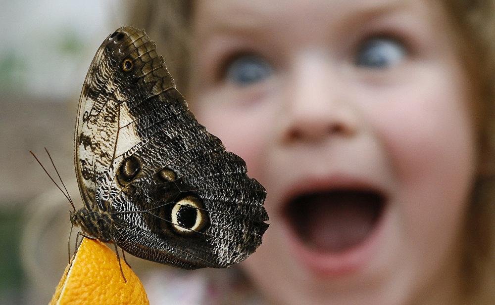Бабочка прикольная картинки