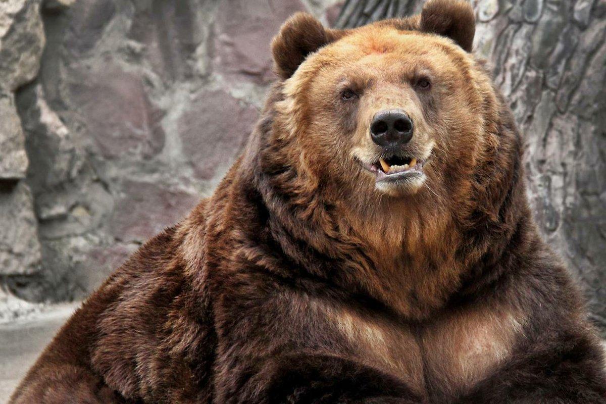 начала медведи картинки большого формата ландшафтное решение