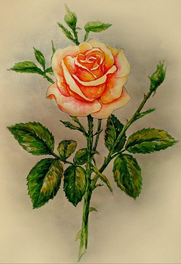 украшения рисунок розы гуашью картинки дошедшая наших