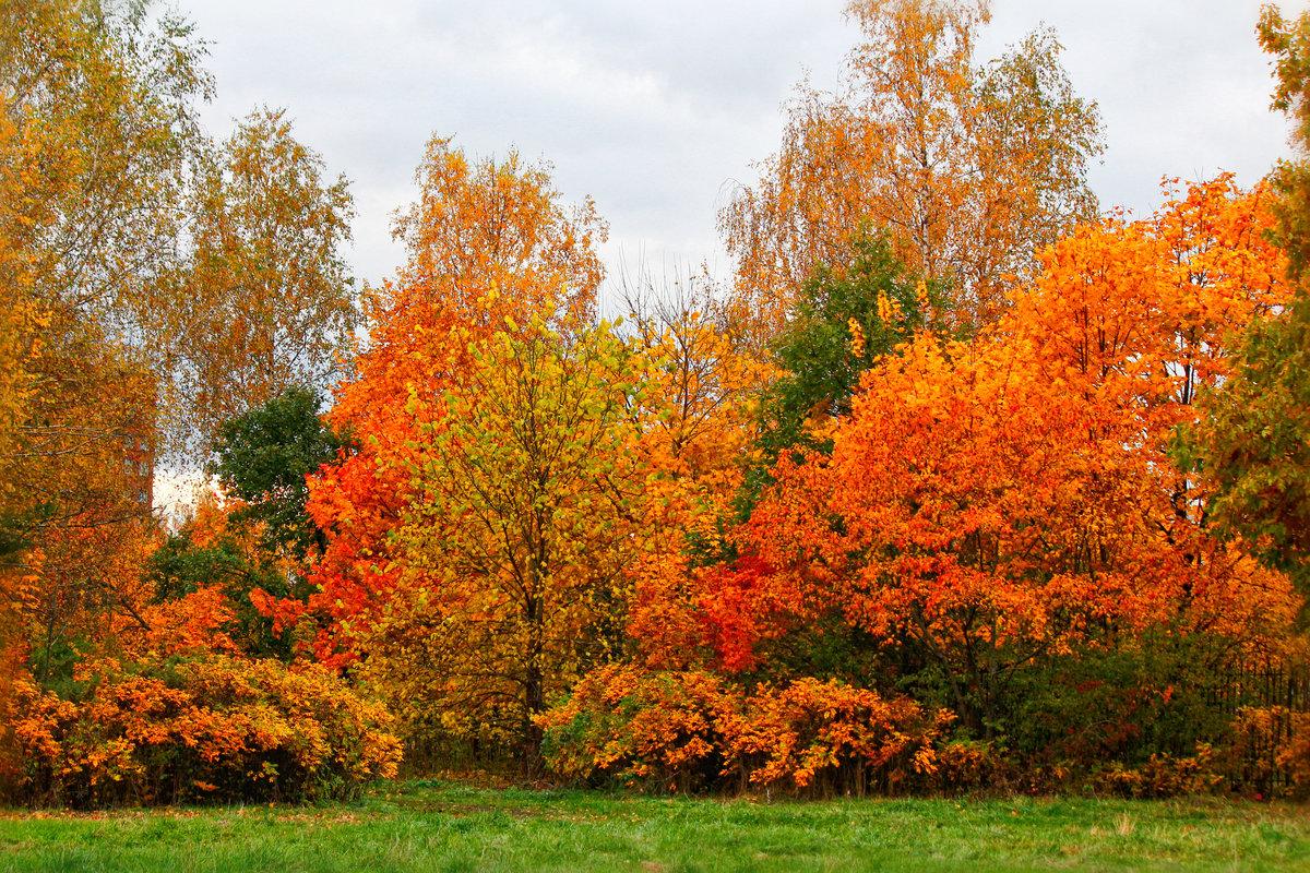 Фото картинки золотой осени
