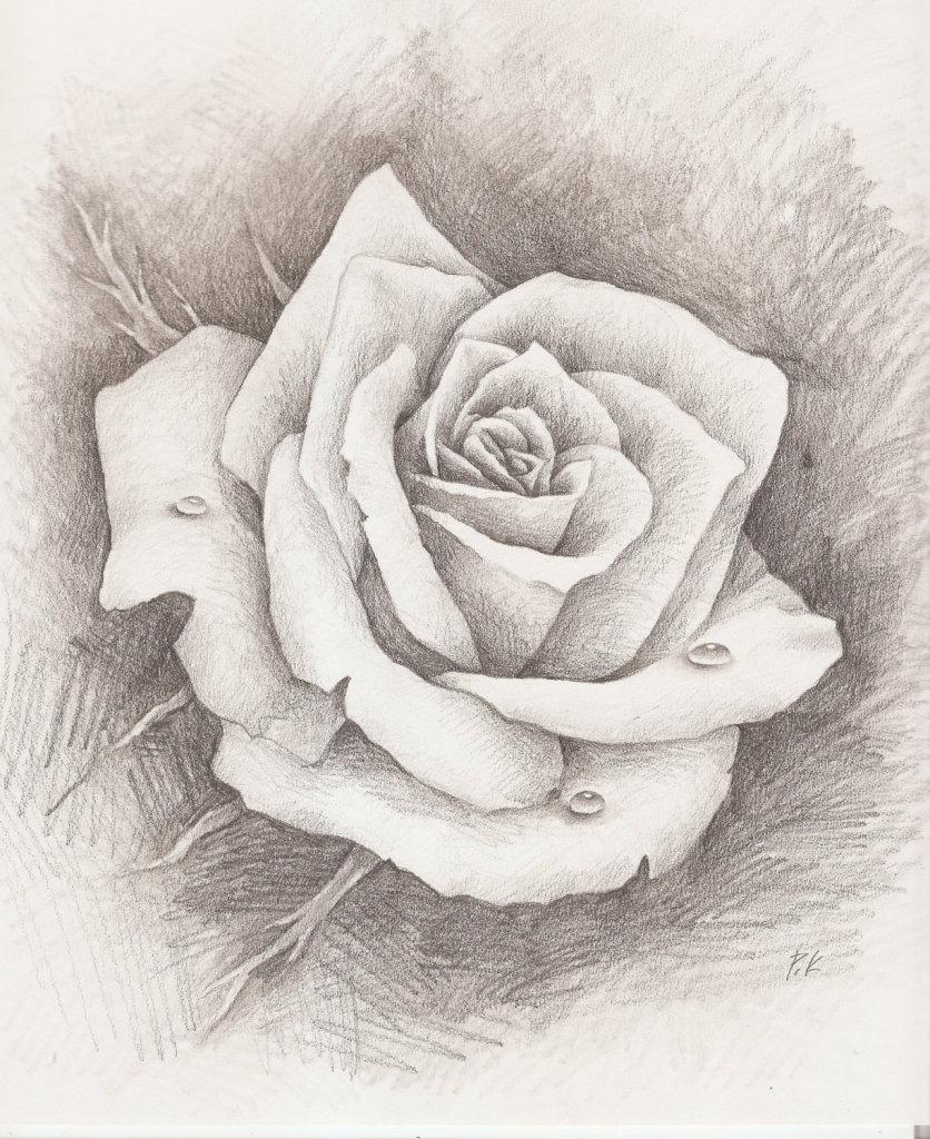 Любимому, розы рисунки картинки