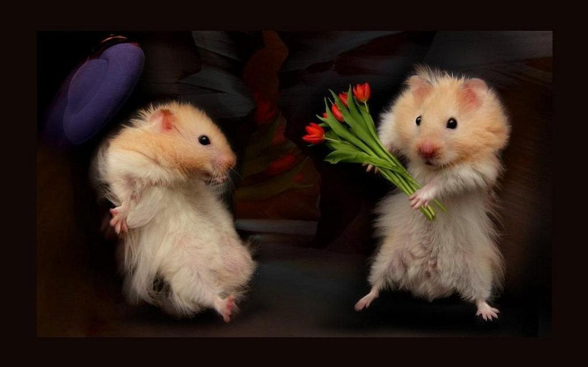 Рождения поздравления, смешные хомячки в любви картинки
