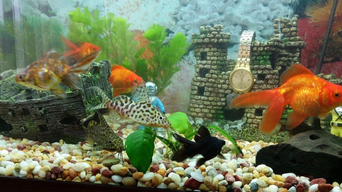 Аквариум с живыми рыбками картинки