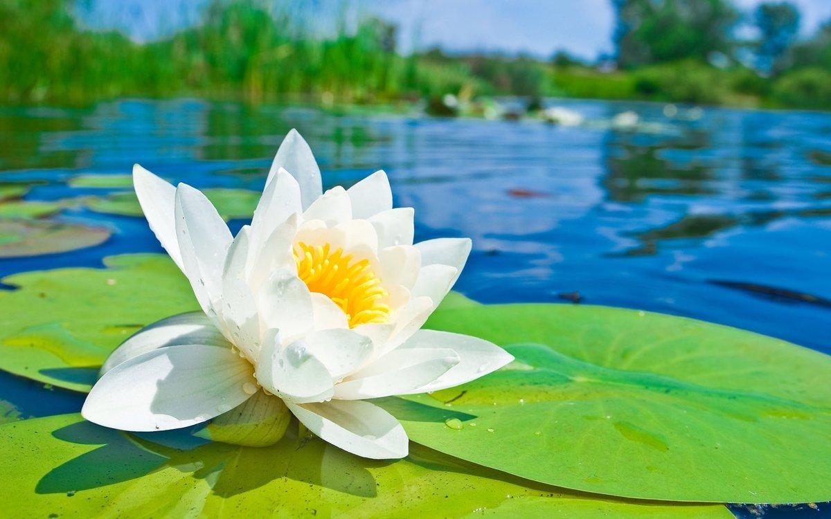 Цветы в воде картинки