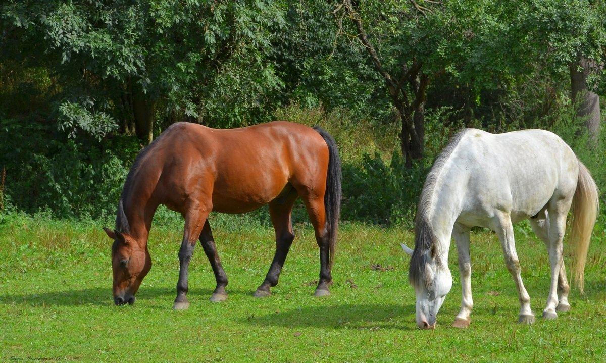 картинки конь на лугу песен элины
