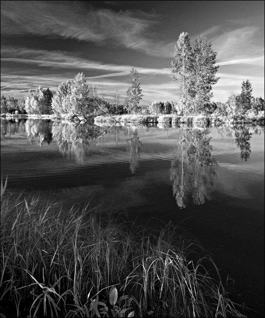 Картинки природа черно белые вертикальные