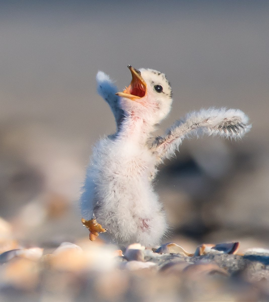Картинки смешных птенцов, открытки дню