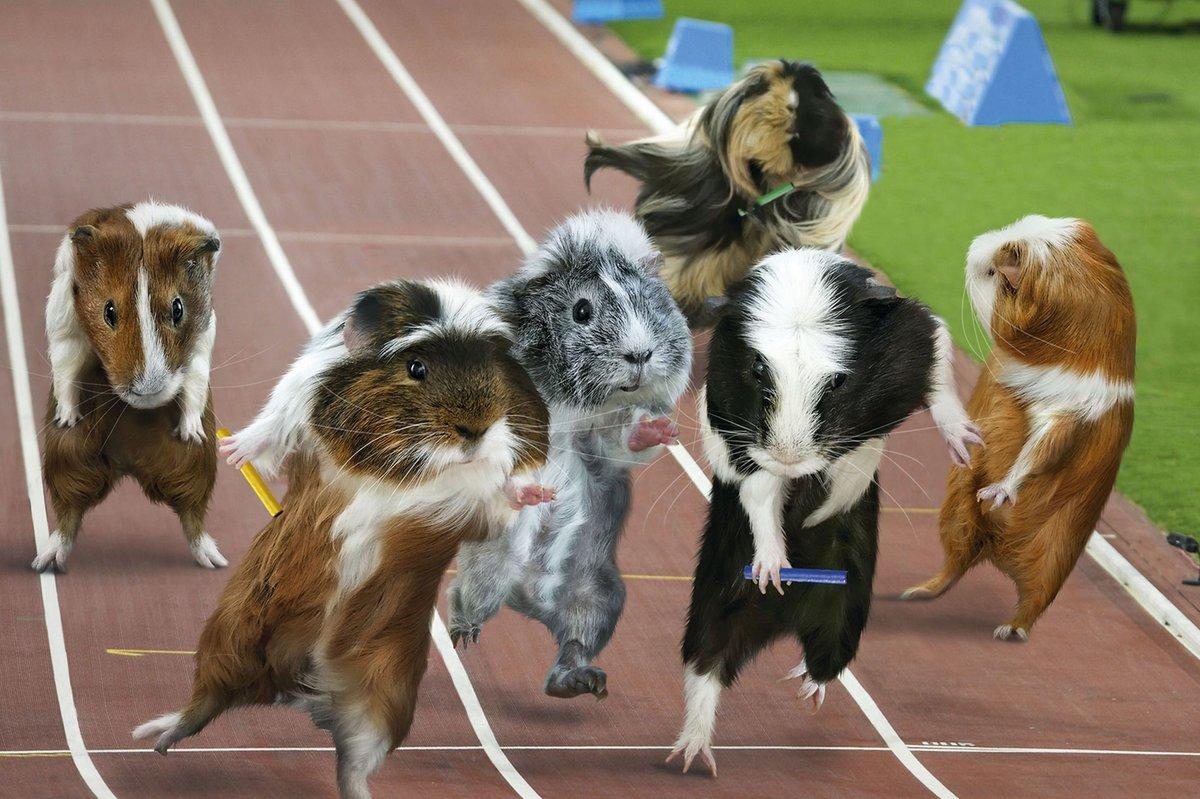 Открытки, смешные картинки про спорт животные