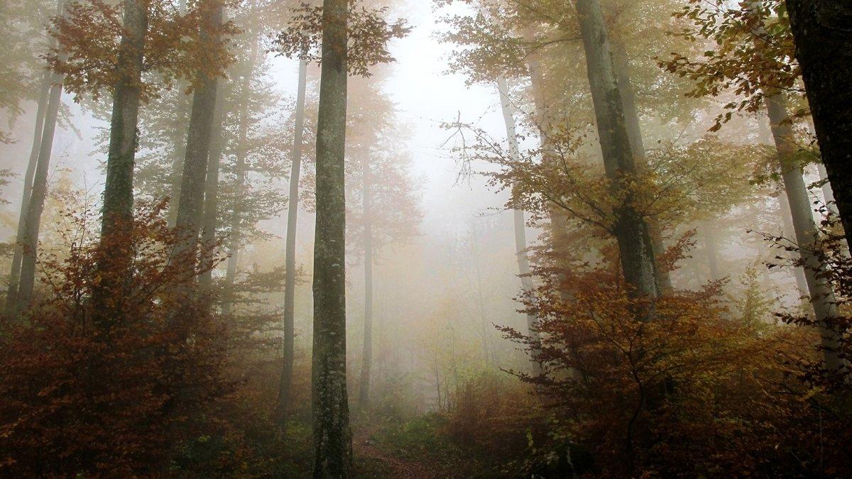 Туман-явление природы, когда в атмосфере образуется большое содержание водяного пара. В основном он возникает от соприкосновения Ñолодного и теплого  воздуÑа.