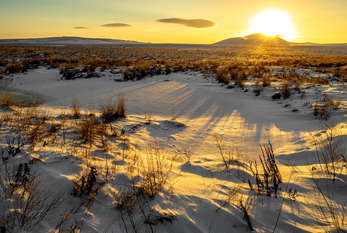 картинки к суровой зиме тундры масло выложить