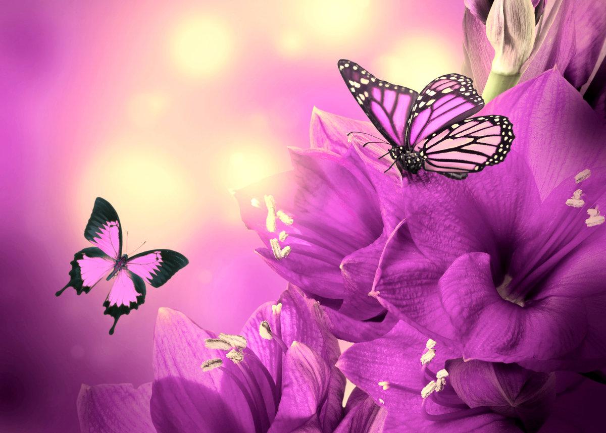 Картинки сиреневые цветы с бабочками, отправить