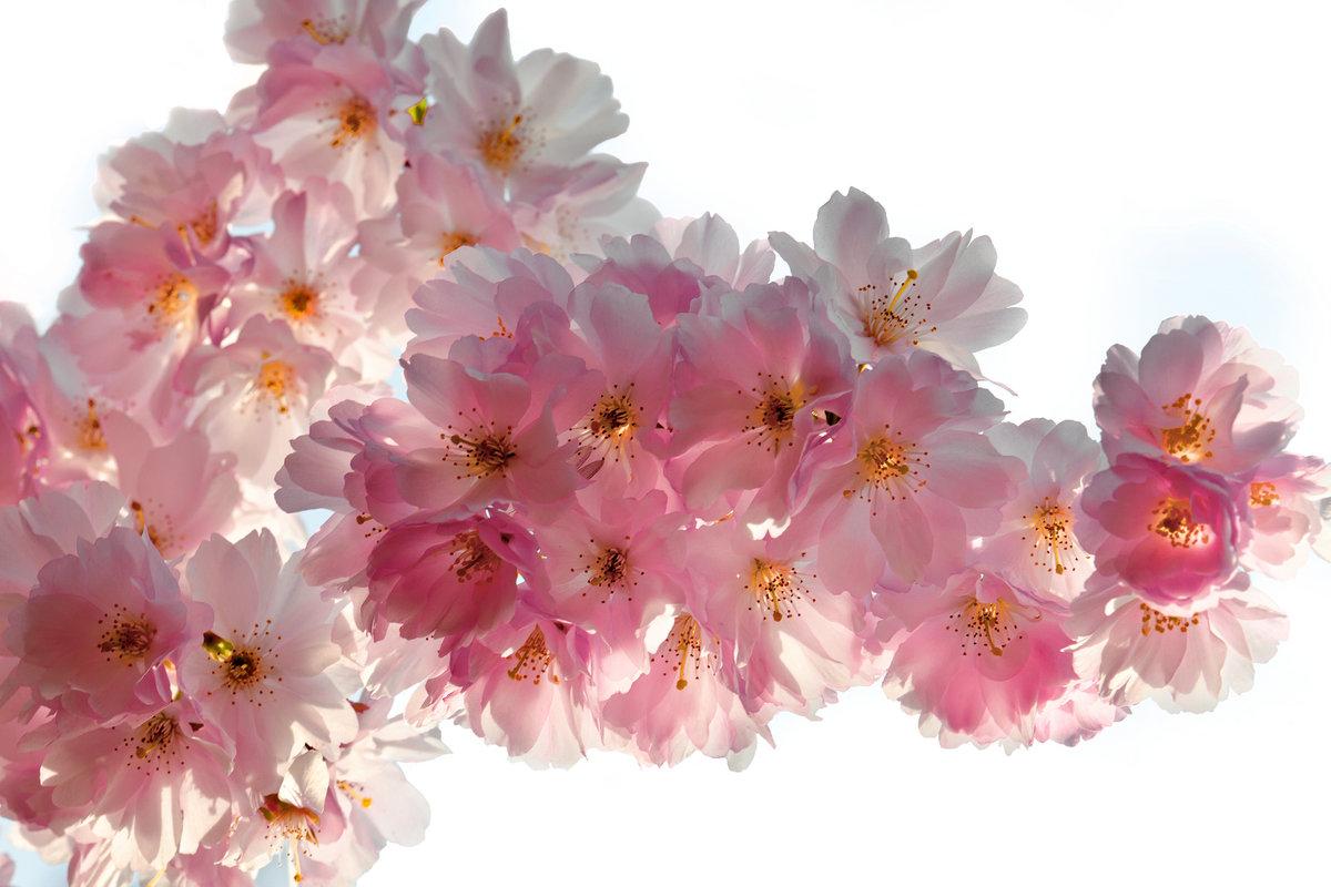 Цветы картинка большой размер