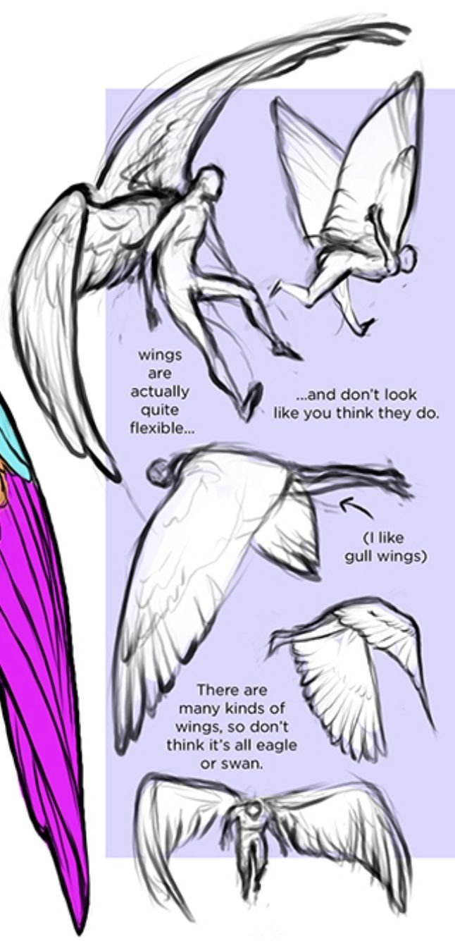 Wings wings wings pinterest wing wing drawings and art reference