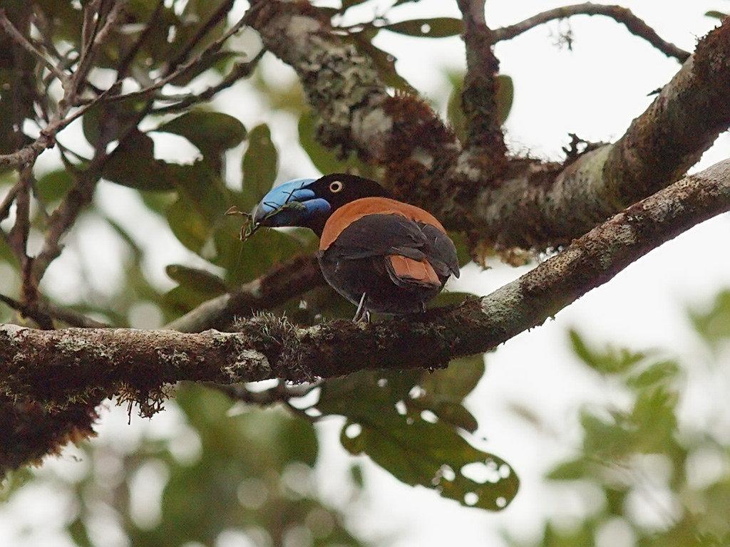 пейзажи, мадагаскарские птицы фото выходные провел расшифровкой