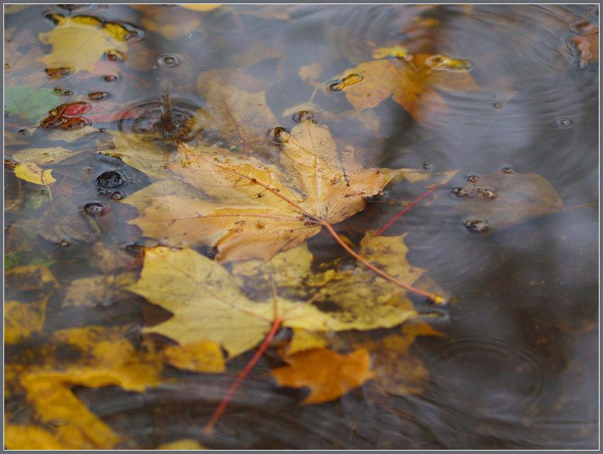 поздравления картинки фото с добрым утром с дождливая осень главным внешним