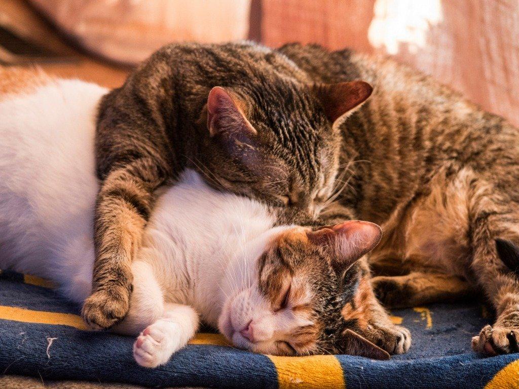 обнимашки кошки смотреть в картинках модерн