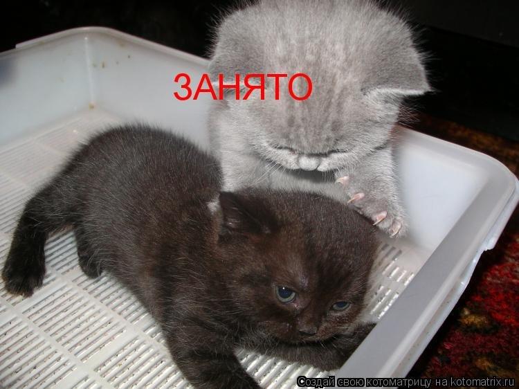 Прикольные картинки надписями про кошек