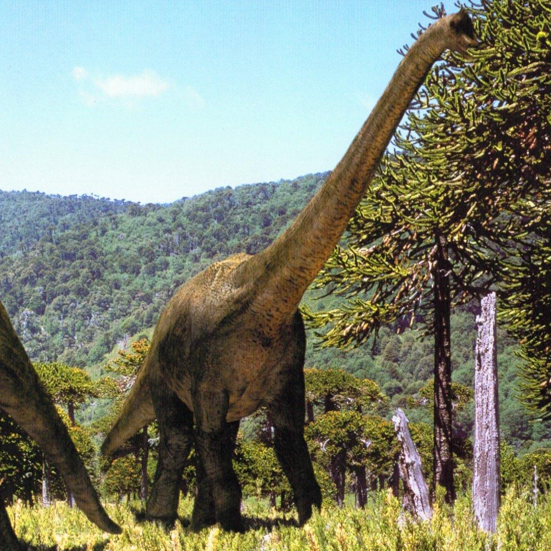брахиозавр фото и описание вьющиеся