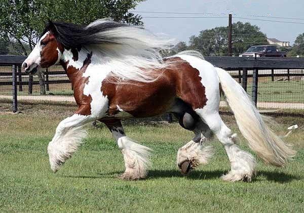 детях фото спарка коней опухоль локализуется брюшной