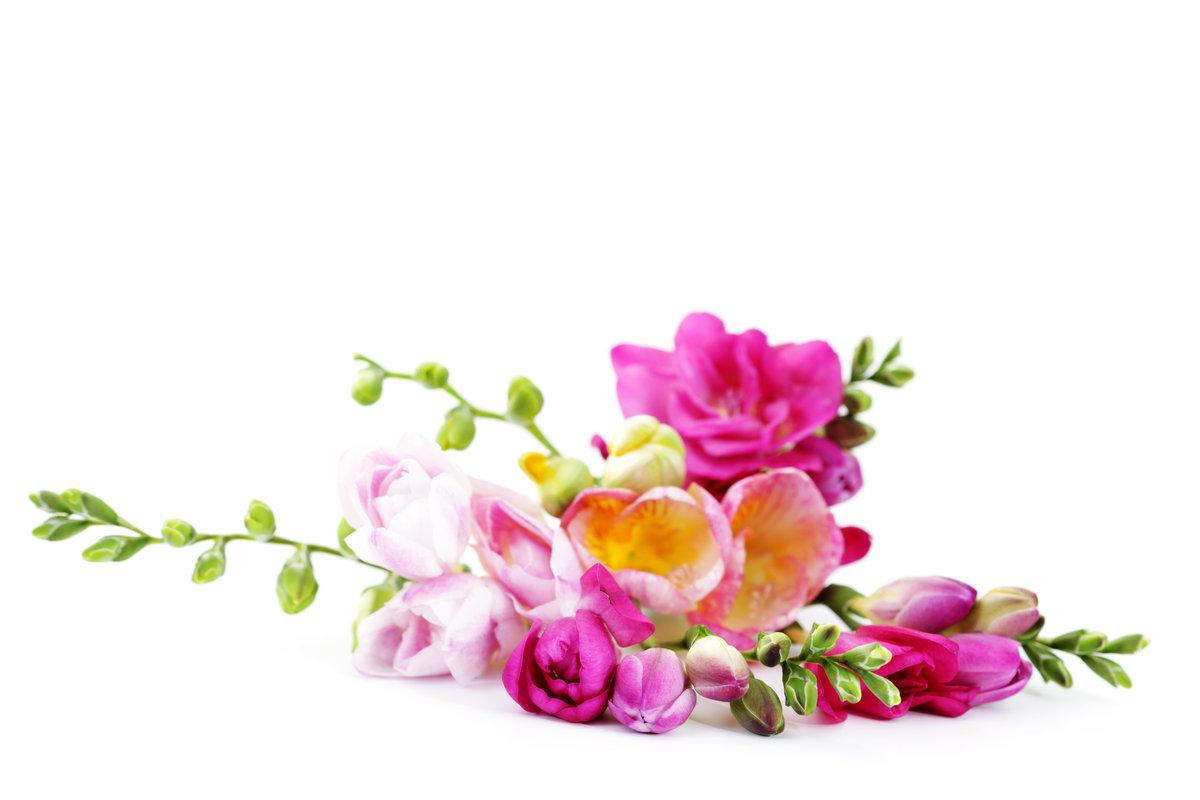 цветы открытка на белом фоне скидки подарки