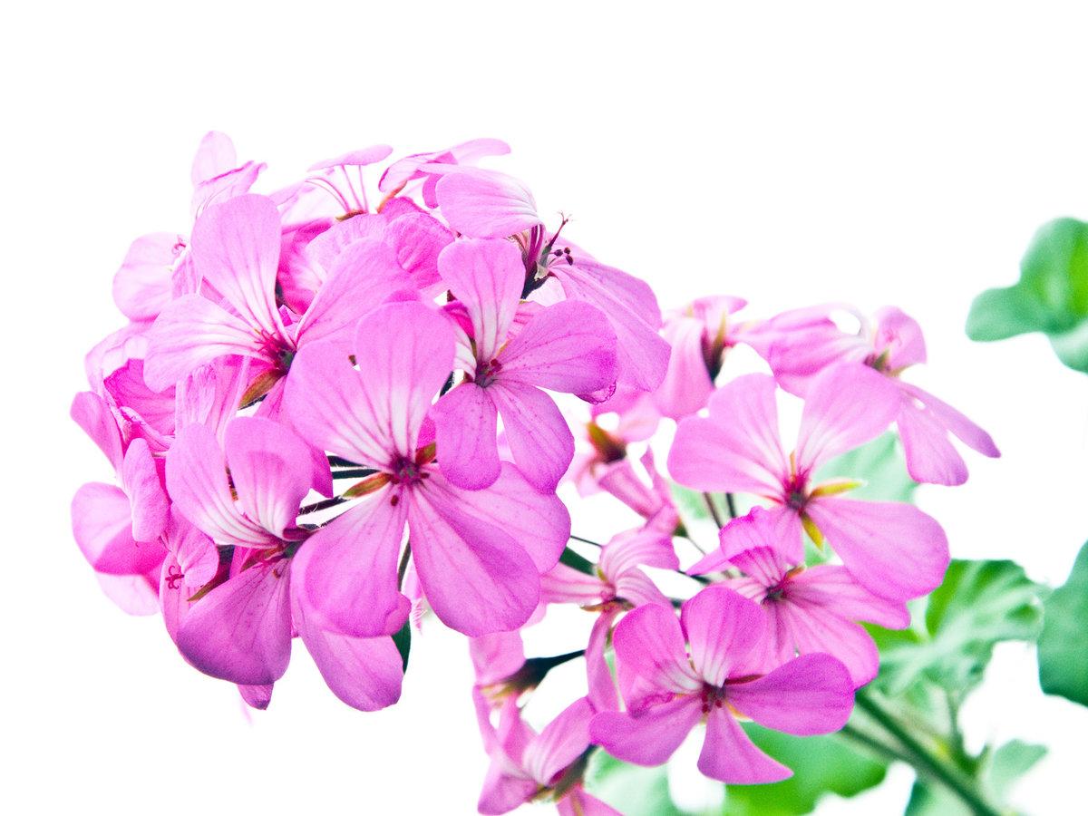 Логотипами, маленькие картинки цветов на белом фоне