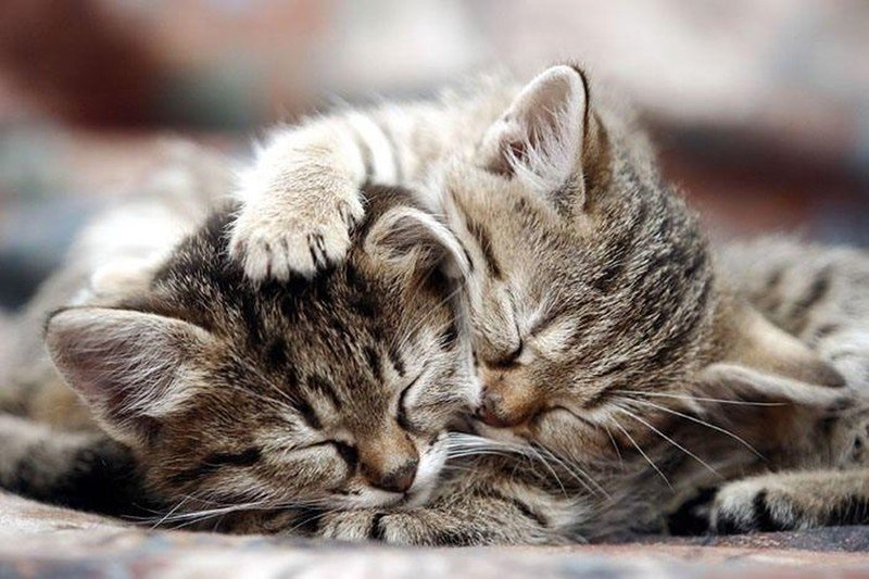 Поцелуй, спим вместе открытка