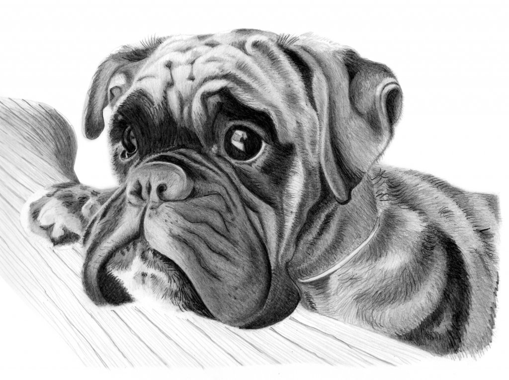 Картинки рисования собак