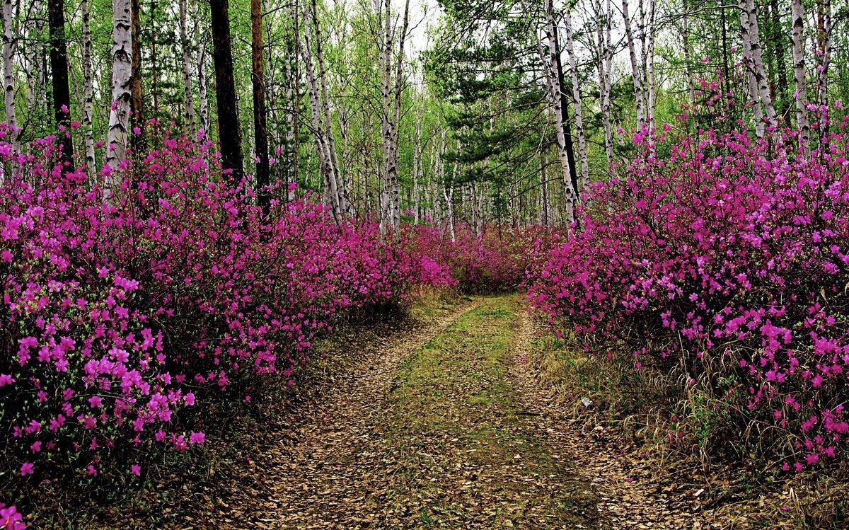 фотографии забайкальская весна раннего возраста