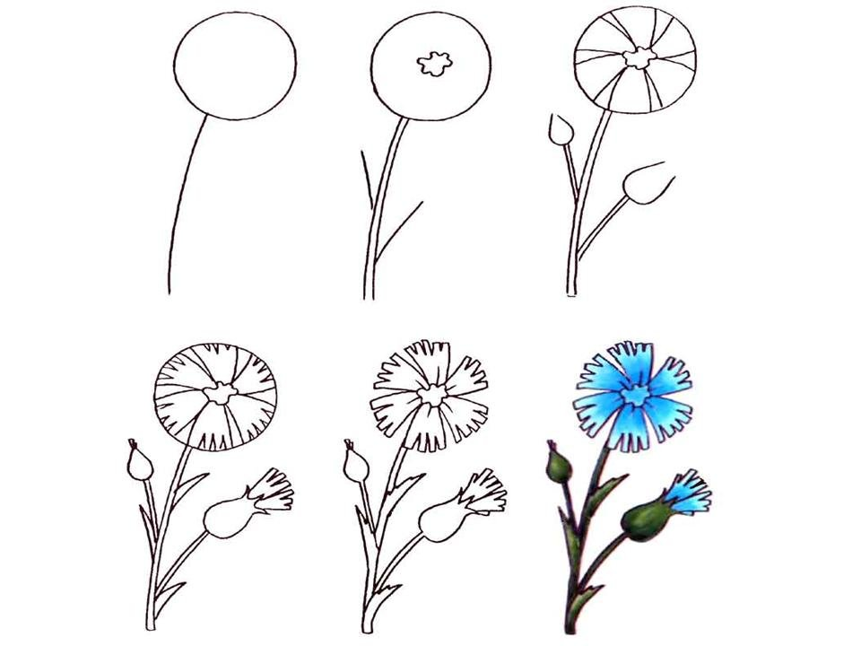 Картинки поэтапно цветы