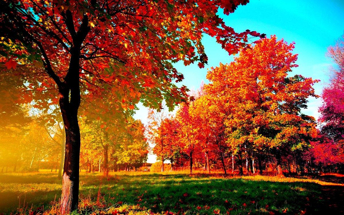 Картинки осень в хорошем качестве на телефон