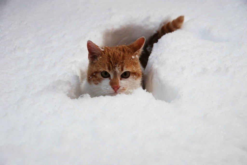 удалось открытка сколько много снега будь веселой всеми